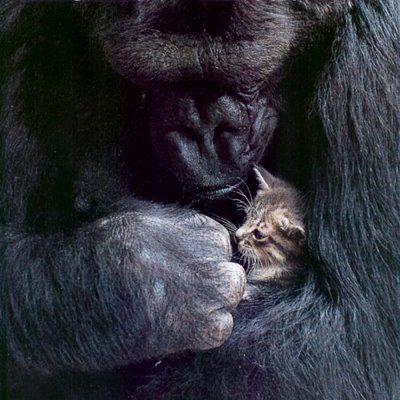 猿と猫の仲13