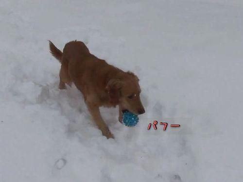 音が鳴るボールに混乱する犬00