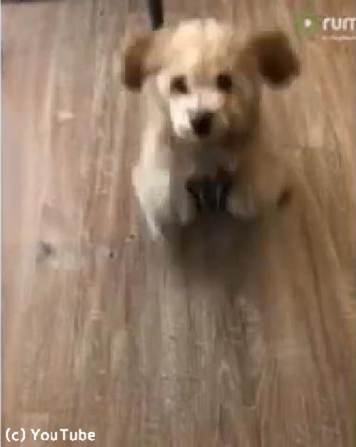 「ぴょこん!」子犬のキュートなお座り02