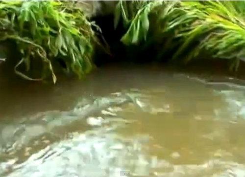 ミネソタ州で洪水03