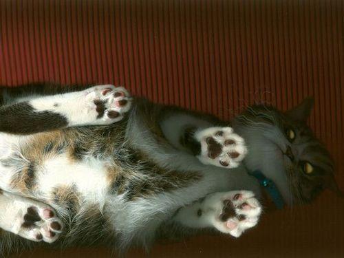 猫スキャン00