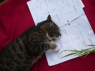 とても賢そうなインテリ猫たち03