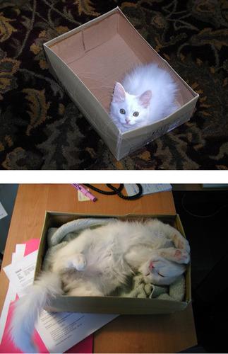 成長した猫01