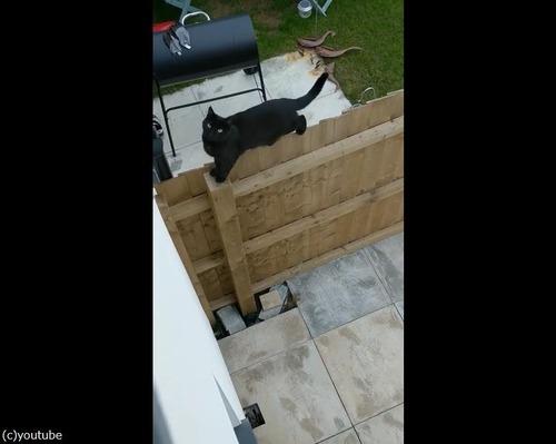 柵の上を歩く猫がちょっとおかしい03