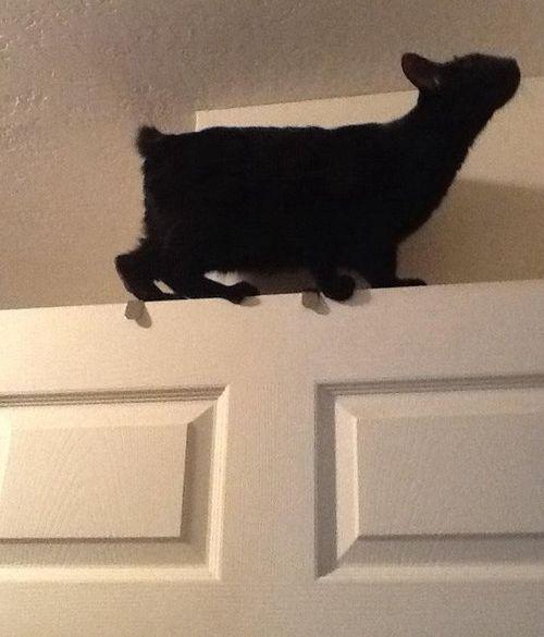 前世は別の動物だったであろう猫10