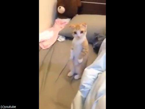 背筋を伸ばして掃除を待つ子猫04