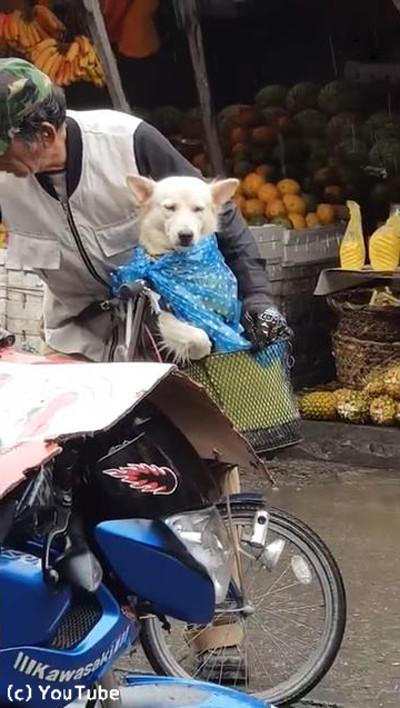 降りだした雨…飼い主さんが愛犬にとった行動に心温まる03