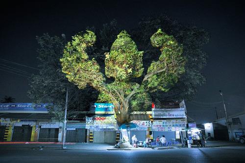 木に3Dのプロジェクションマッピング09