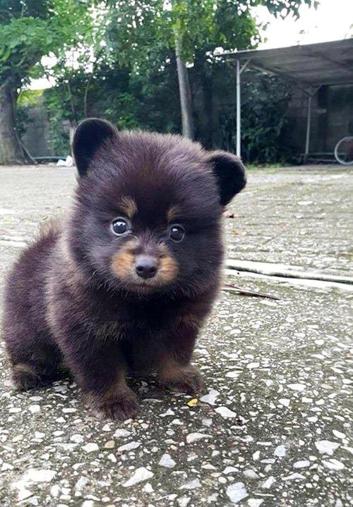 03Baby 赤ちゃん動物たち baby bear