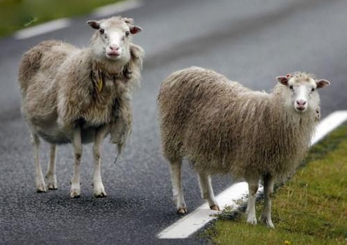 道路を渡る動物09