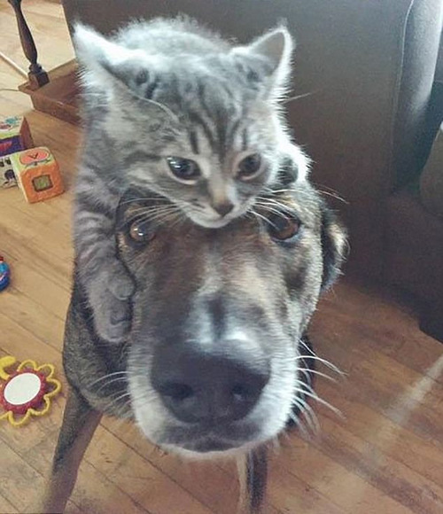猫をかぶる犬たち02