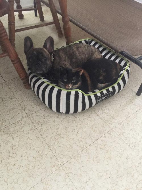 猫にベッドを奪われた犬たち21