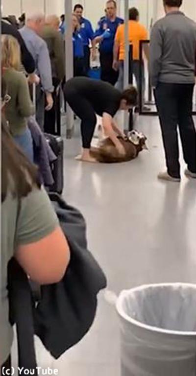 空港で駄々をこねるワンさん03