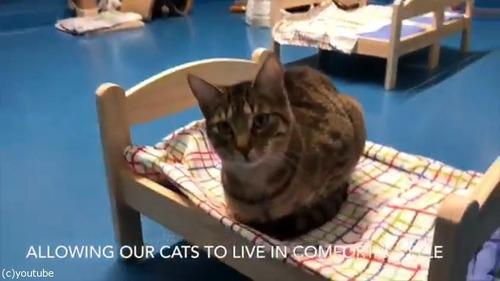 猫にピッタリのベッドを寄付した結果03