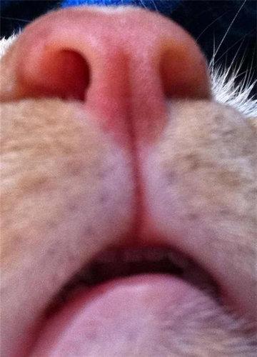 猫の自撮り18