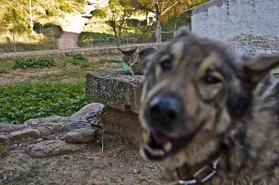 邪魔する犬と猫04