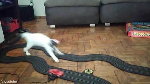 クルマのおもちゃにハイテンションになる猫03