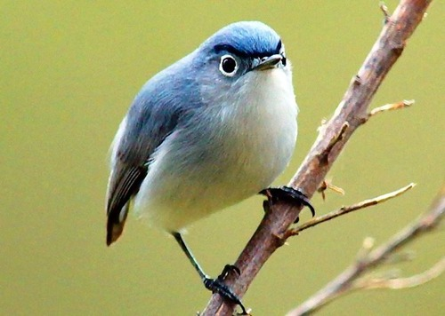 オヤジ顔の鳥03