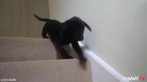 階段に苦労する子犬たち01