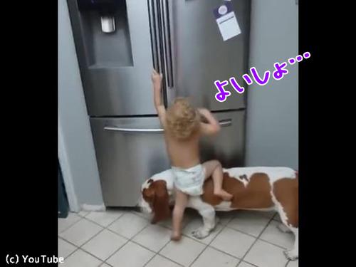 赤ちゃんを助ける犬00