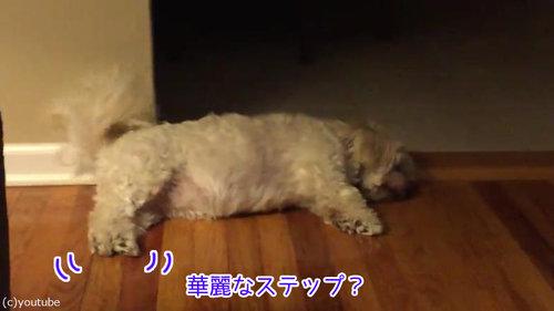 寝ながらしっぽを振る犬02