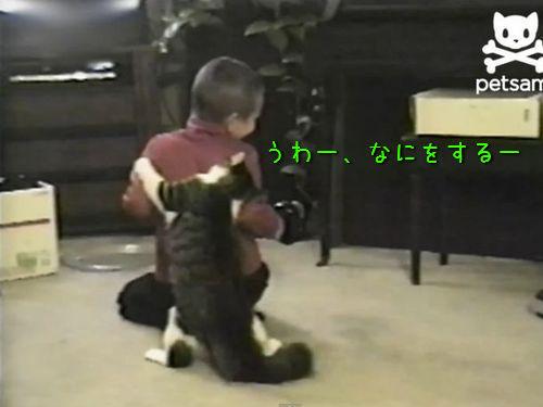 男の子を襲う猫