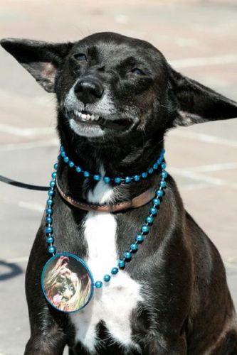 笑う犬01
