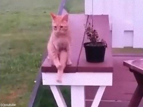 人間のように座る猫04