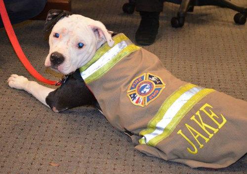 火災から救出された子犬、消防士に11