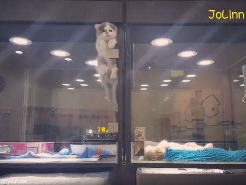 隣の犬に会いに行く猫01