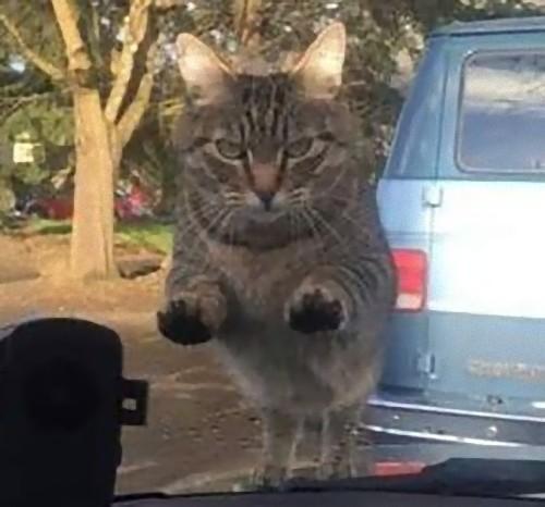 「遅刻しそうになって、猫にエサをあげるのを忘れた日の朝」02