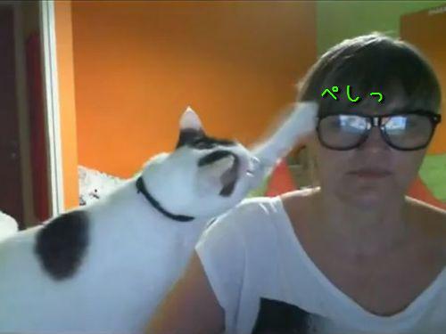 メガネ嫌いの猫