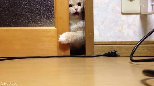 ドアを開けて欲しい猫04