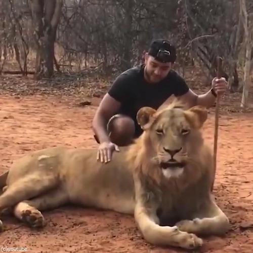 ライオンのクシャミ02