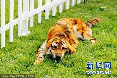 ペイント犬05
