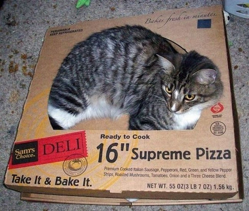 ピザ猫15