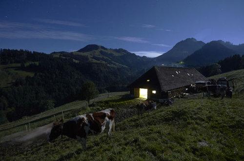 スイス・チーズ07