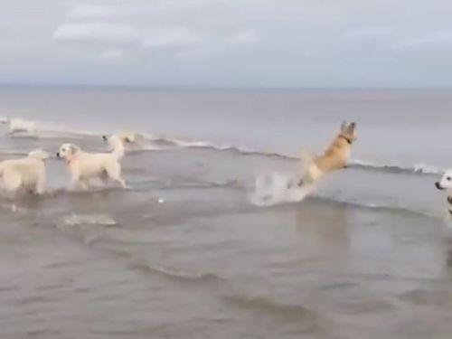 犬の水切り02