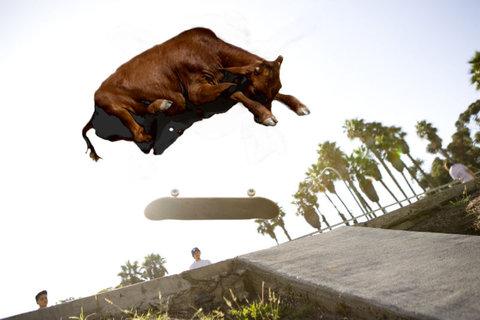 牛のジャンプ力を05