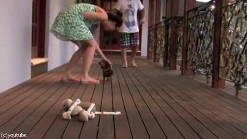 レディを守る小さな子犬07
