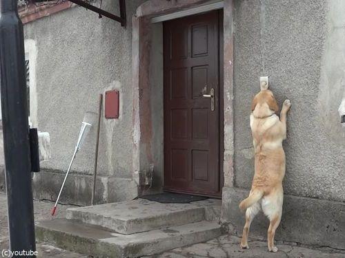 家に入りたい犬07