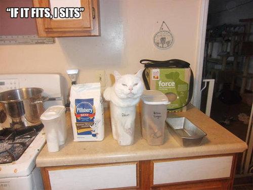 おかしな猫たち17