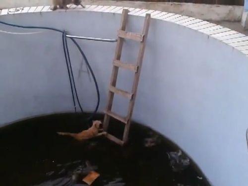 プールに落ちた猫をハシゴで救出01