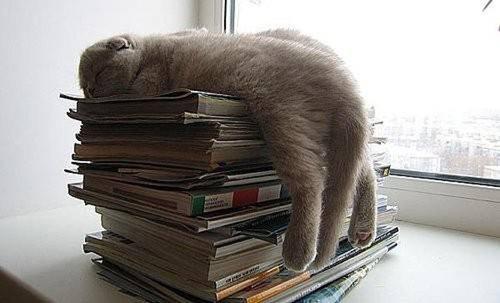 どこでも眠る猫05