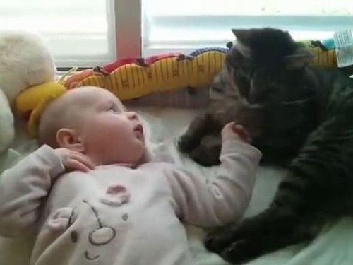 猫「赤ちゃんの寝相が悪いな」01