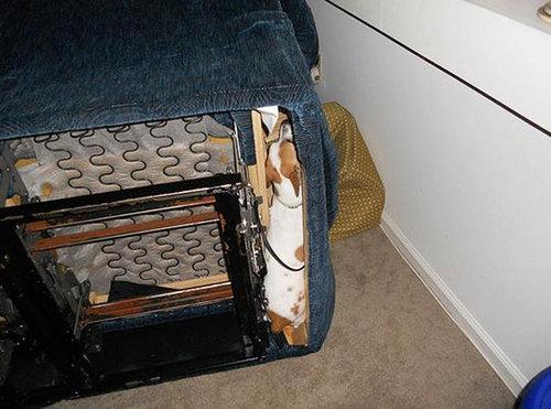 犬や猫の家具の使い方11
