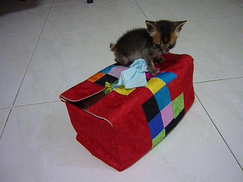 子猫拾った11