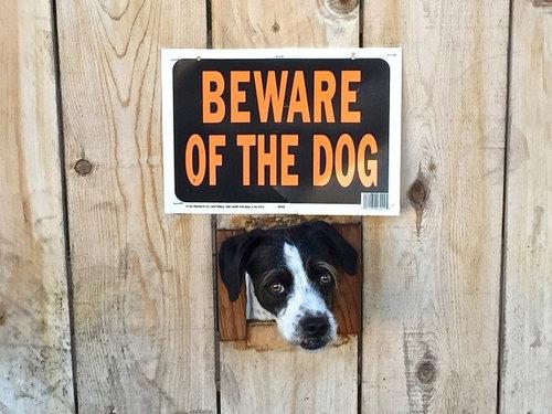 「猛犬注意」の看板06