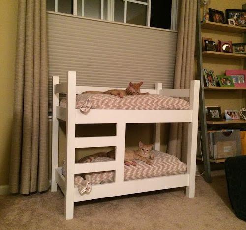 猫のための2段ベッド01