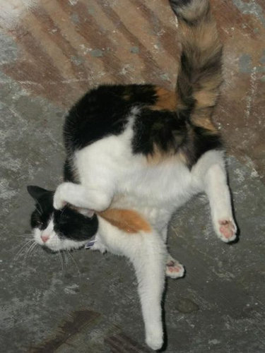 おいしそうな脚の女子校生 239脚目猫ガイジ隔離スレ [無断転載禁止]©bbspink.com->画像>4306枚